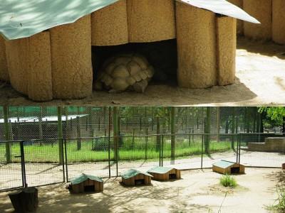 0211 ルアン動物園2